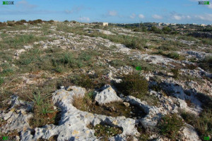 mini limestone craters on malta