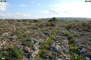 Cart Ruts location near Skorba Temple, Zebbieh, Malta along Triq Busewdien