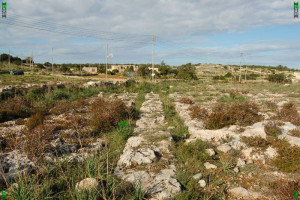 St Pauls Bay Cart Ruts located at Busewdien, Malta