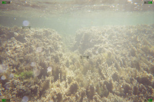 cart ruts underwater bay mystery malta saint georges bay submerged