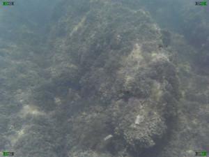 cart ruts water under submerged tracks