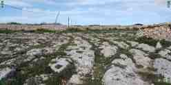 Cart Ruts Clapham Junction Malta, south field, intersecting