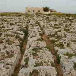Cart Ruts - Cart Rilles - east field of Clapham Junction in Malta near Buskett Gardens