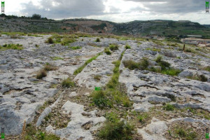 how were the cart ruts made formed created malta