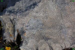 lichtenberg discharge pattern nature figure event limestone mineral