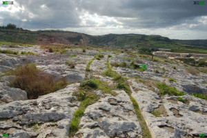 naxxar gap cart tracks malta ruts maltese