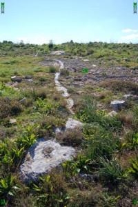 rock snake malta limestone geology pembroke