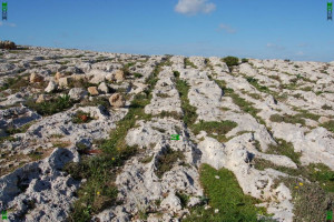 clapham junction cart ruts malta chariot roads paths roman greek