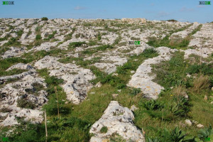clapham junction cart ruts malta iron age vehicles transport paths