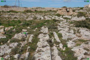 island of malta cart tracks car roads temple builders romans chariots