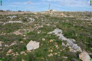 malta cart tracks grey gray rock outcrops limestone