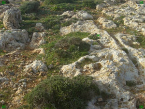 malta cart ruts tracks locations il-Pellegrin