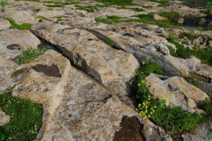 maltese limestone geology features strange puzzle mystery lines